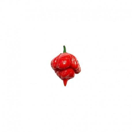 Trinidad Scorpion Butch T Seeds