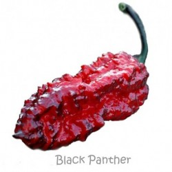Dried Black Panther