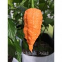 Dried Bhut Jolokia Peach