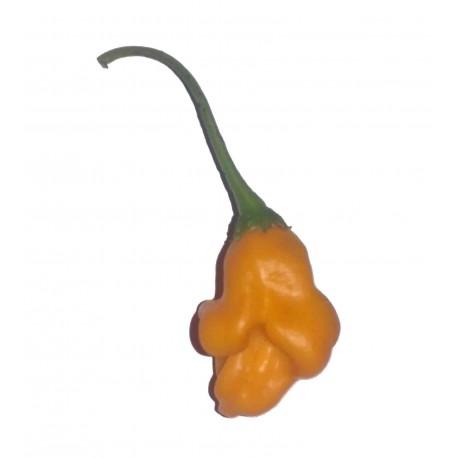 Bishop's Crown Orange seco