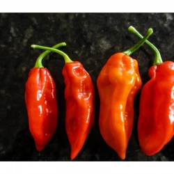Fatalii Red seeds