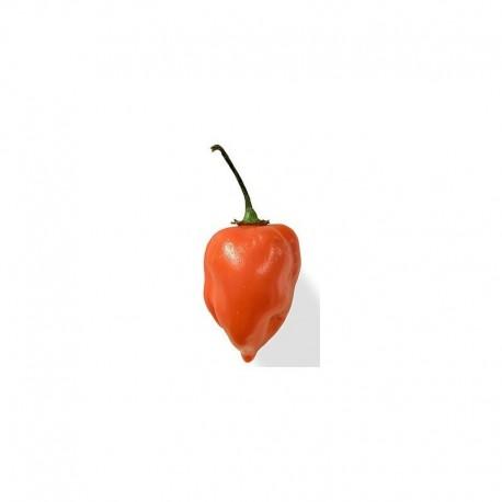 Habanero Orange seeds