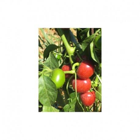 Cherry Pepper seeds