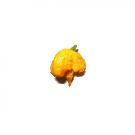 Dried Carolina Reaper Yellow