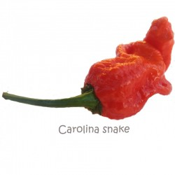 Dried Carolina Snake