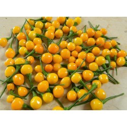 Aji charapita seeds