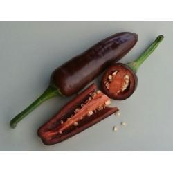 Jalapeño brown seeds
