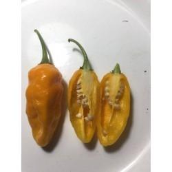 Salvatore jones yellow seco