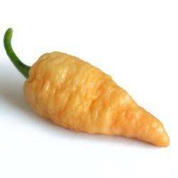 Bengal Naga peach séché