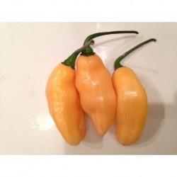 Dried Pimenta de Neyde Yellow
